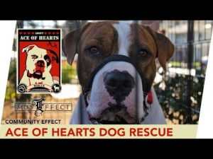 Ace Of Hearts Dog Rescue