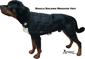 Active-Dogs-Dog-Endurance-Builder-Weighted-Vest.jpg