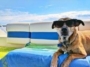 BEST DOG RESCUE MASSACHUSETTS