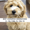 Best Cockapoo Generations F1 F1B F1BB F2 F2B F3