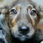 Best Dog Rescue Michigan