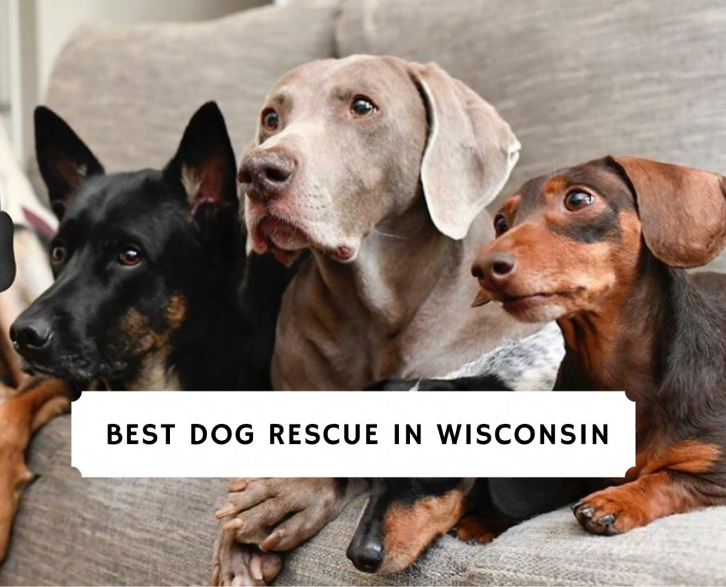 best dog rescue in wisconsin