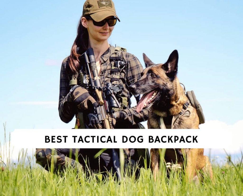 Best Tactical Dog Backpack