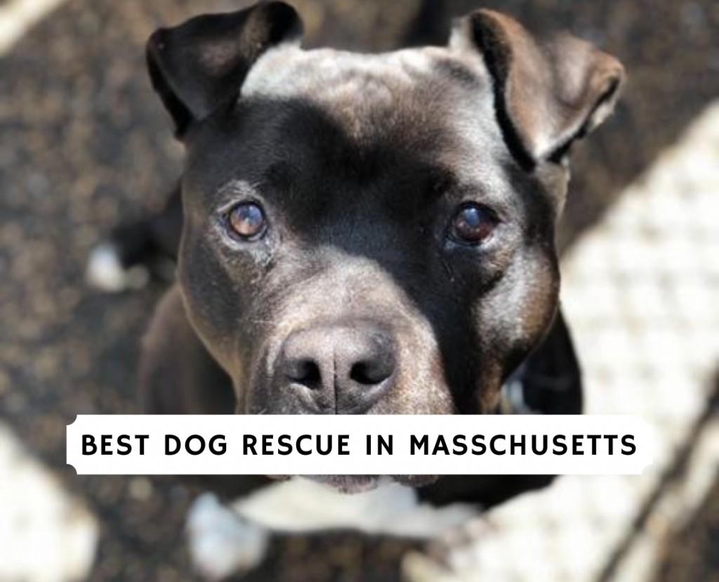 Best dog rescue in Massachusetts