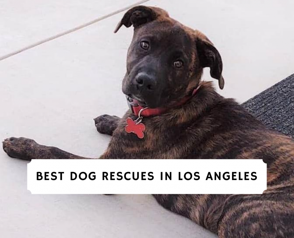 Dog Rescue in Los Angeles