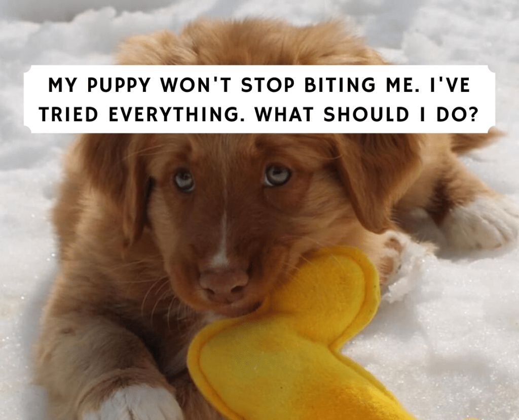 My puppy won't stop biting me. I've tried everything.