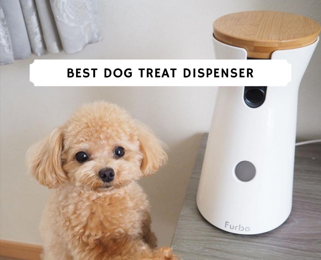 best dog treat dispenser