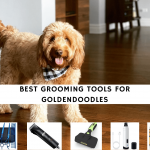 best grooming tools for goldendoodles