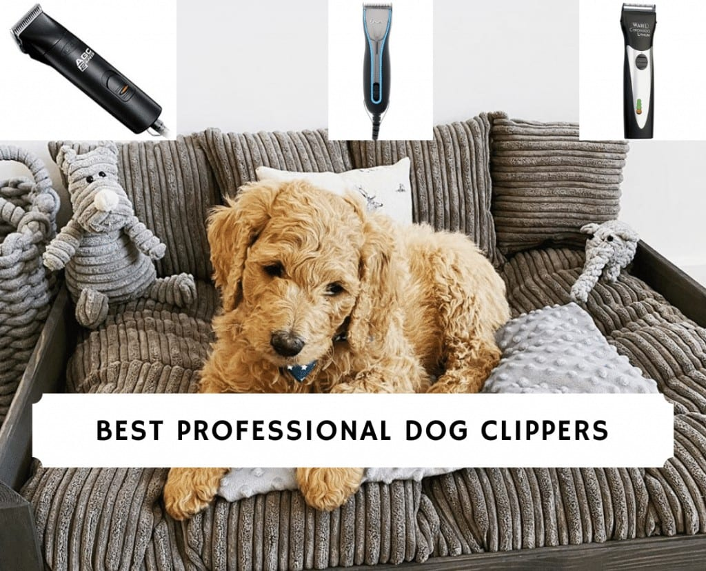best professional dog clippers