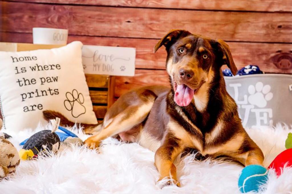 best dog rescue minnesota (mn)