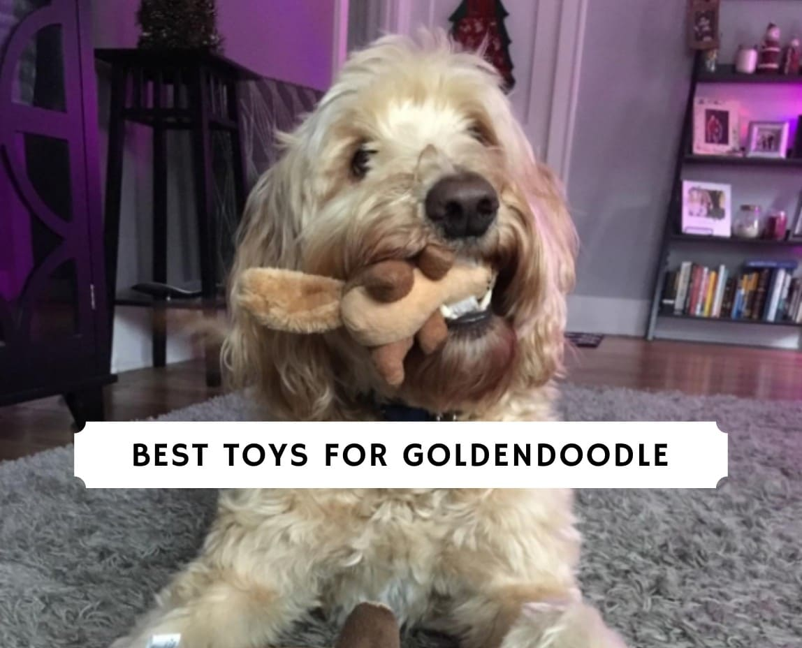 best toys for goldendoodle