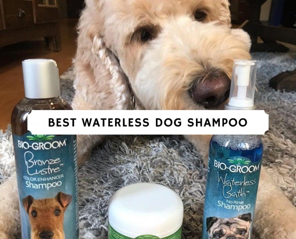 best waterless dog shampoo