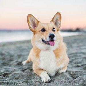 dog health benefits of mint