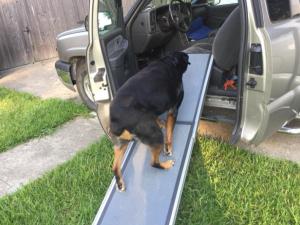 dog ramp for truck