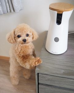 dog treat camera dispenser