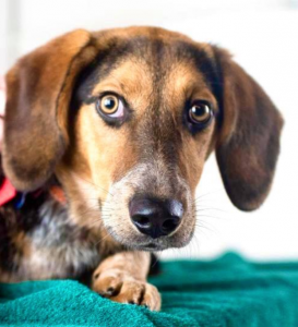 last hope companion pet rescue mn