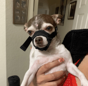 muzzle training to stop dog from biting