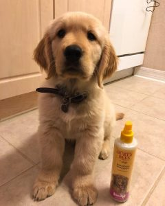 no water dog shampoo