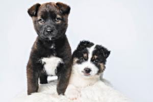 northern lakes dog rescue minnesota