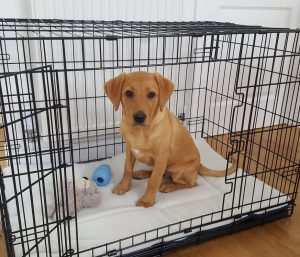puppy crate training to stop biting