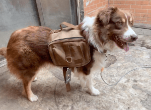 tactical dog vest with backpack