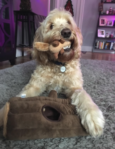 toy for goldendoodle