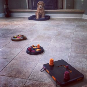 trixie interactive toys for dogs