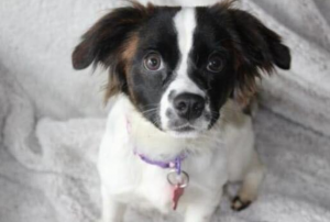 wags and whiskers animal rescue minnesota