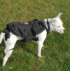 weight pulling vest for dogs