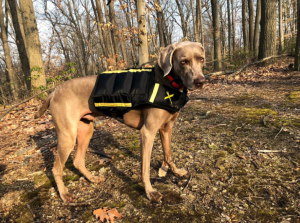 weighted dog vest for exercise