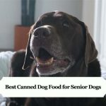 Best Canned Dog Food for Senior Dogs