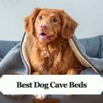 Best Dog Cave Beds