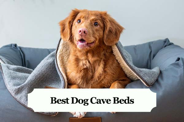 Best Dog Cave Beds