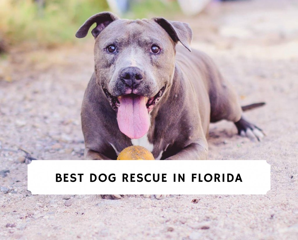Best Dog Rescue in Florida