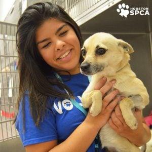 Dog Rescues Houston, Texas