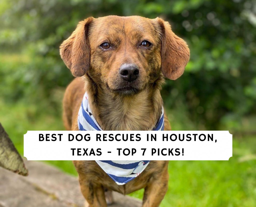 Best Dog Rescues in Houston, Texas - Top 7 Picks!