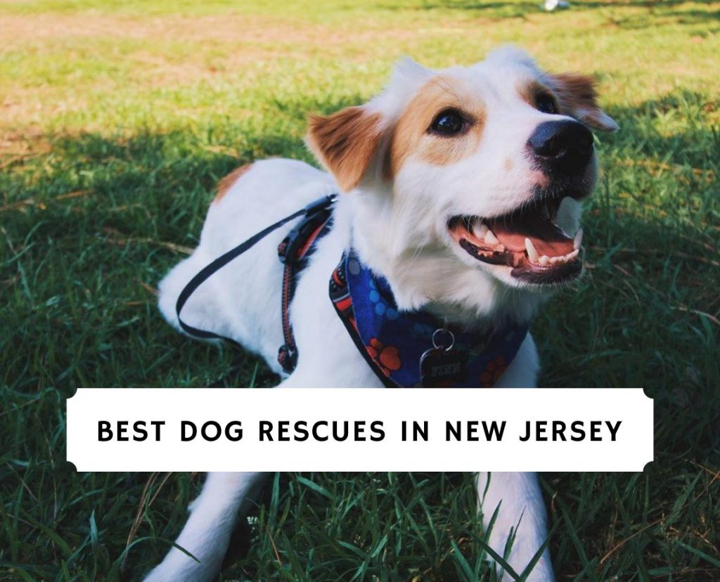 Best Dog Rescues in New Jersey