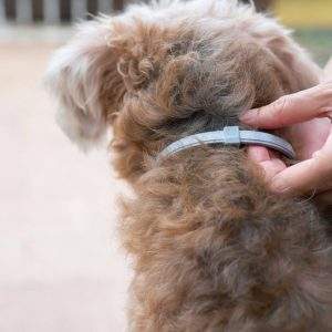 Dewel Flea and Tick Collar on dog