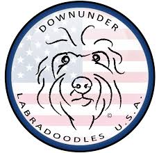 DownUnder Labradoodles USA