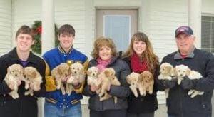 Iowa Goldendoodle Dandys