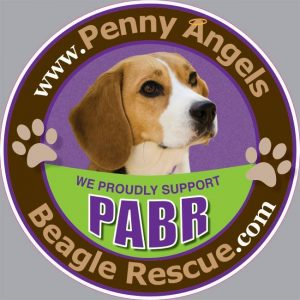 Penny Angel's Beagle Rescue