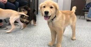 Puppy Tots