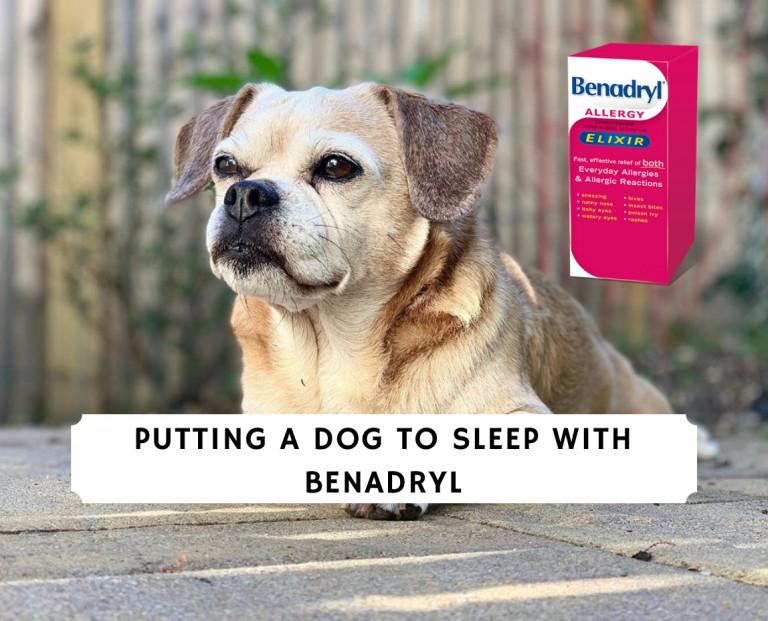 Putting a Dog to Sleep with Benadryl