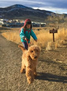 Red Rock Goldendoodles puppies in Colorado