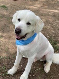 The Adore Houston Dog Rescue
