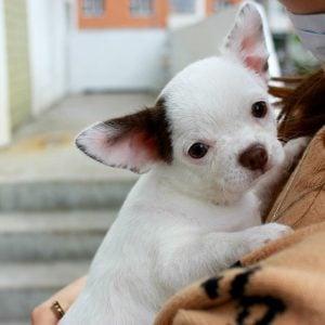 dog adoption chicago