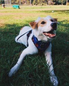 dog adoption new jersey