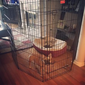 72 in dog crate picture with dog