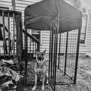 72 inch dog kennel