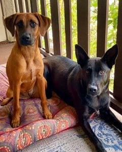 Adopt A Doggie Bay Area